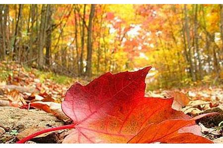 Ngắm sắc vàng rực rỡ của mùa thu